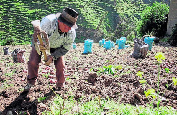 Potenciar la Agricultura