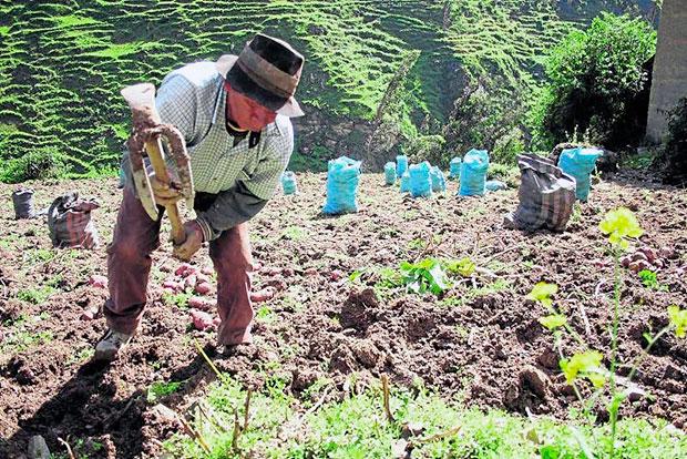 <b>Potenciar la Agricultura</b><br> El Perú es uno de los doce países considerados como megadiversos y se estima que posee entre 60 y 70% de la diversidad biológica. Esta ventajosa situación se ha visto amenazada con un inadecuado manejo de recursos existentes llevándolo a niveles críticos de deterioro de ciertas zonas del país generando problemas de desertificación, deforestación, salinización, pérdida de tierras agrícolas, toxicidad de la vegetación, agotamiento de las fuentes de agua, degradación de ecosistemas y desaparición de especies silvestres.  La situación de pobreza de la mayor parte de campesinos y pequeños productores agropecuarios se explican en parte por la utilización inadecuada y degradación de la base productiva de los recursos naturales debido a la aplicación de sistemas productivos que generan desequilibrios negativos entre el proceso de extracción y regeneración de los recursos naturales.  Promover acciones para el manejo y uso productivo de los recursos naturales renovables, agua, suelo y cobertura vegetal mediante obras de conservación de suelos, reforestación, transferencia tecnológica mejorada e infraestructura rural en la perspectiva de lograr una agricultura sostenible